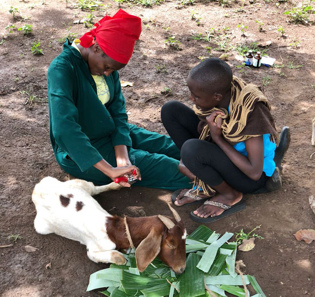 Dr Caroline Asiimwe performs a livestock check for Budongo Conservation Field Station